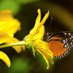 Arenal butterfly garden