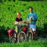 Provence Self-guided-cycling