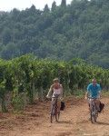 Lanscapes-of-Luberon-Cycling