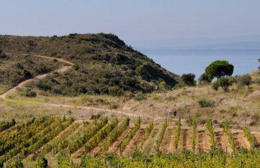 0000e5_spain_catalunya_Vineyard-fields-near-g.jpg