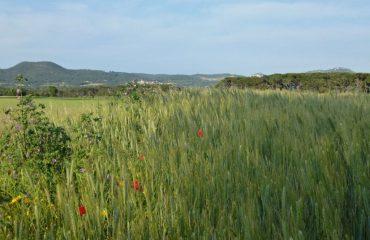 0000e8_france_catalunya_countryside-views--g.jpg