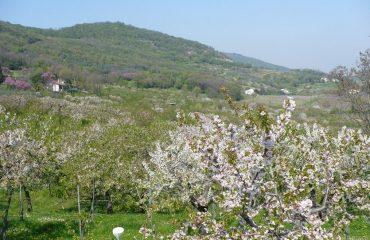 0004de_italy_venetia_the-veneto-in-spring-g.jpg