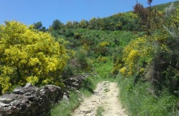 0004f5_spain_galicia_Countryside-walking--g.jpg