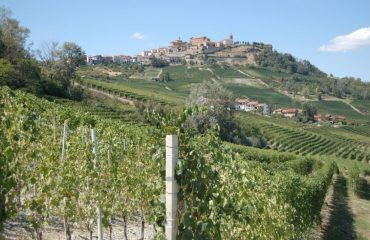 000602_italy_piedmont_close-up-of-vines-wi-g.jpg