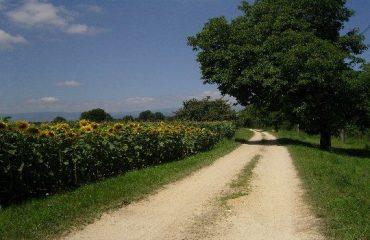 00064b_austria_danube_Quiet-country-lanes-g.jpg