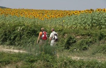 000666_italy_chianti_sunflowers-with-walk-g.jpg