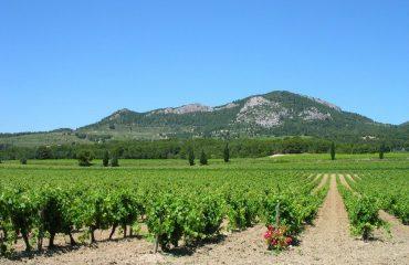 000697_france_provence_Vaucluse-vineyards,--g.jpg