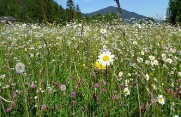 00076e_germany_meadow-with-flowers-g.jpg