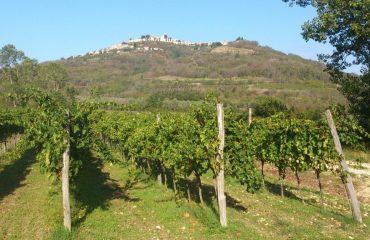 000942_croatia_Vines-g.jpg