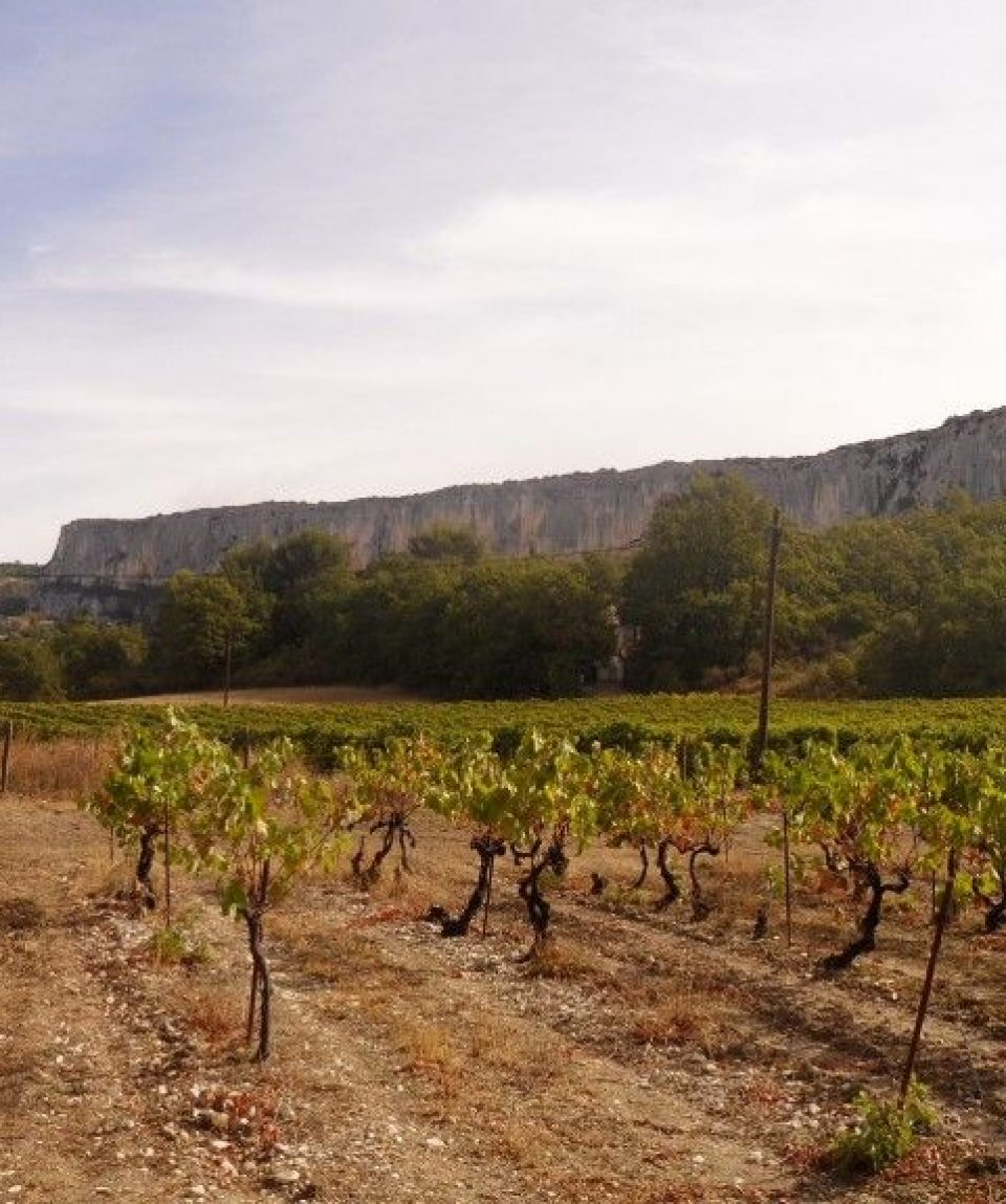000a7a_france_provence_vines-g.jpg