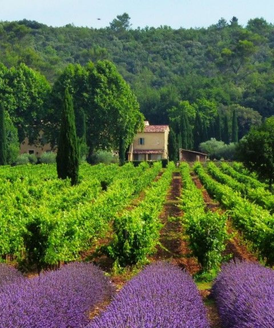 000e16_france_provence_Lavender-fields-near-g.jpg