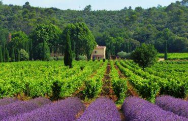 000e16_france_provence_Lavender-fields-near-g.jpg