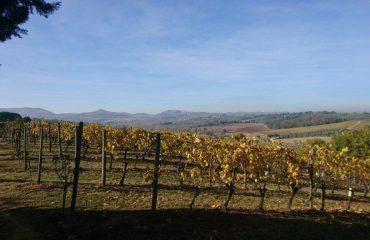 italy/tuscany/0019a8/Autumn-Vines-g.jpg