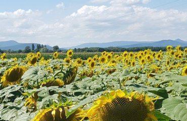 france/alsace/00174c/Heidolsheim-Alsace-g.jpg