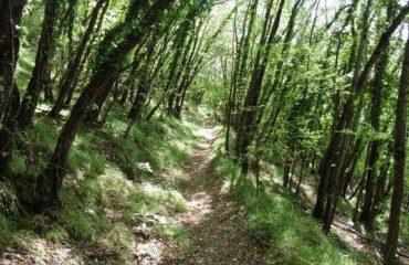 italy/umbria/00175e/Sunlit-forest-trail--g.jpg