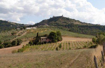 italy/umbria/001755/View-across-fields-t-g.jpg