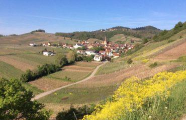 france/alsace/0011c5/View-of-Ammerschwihr-g.jpg