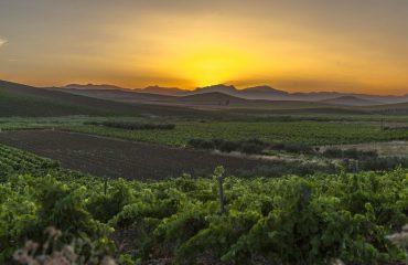 italy/sicily/000fe0/Vineyards-at-Sunrise-g.jpg