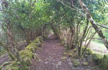 ireland/any/0016d5/Walking-path-with-so-g.jpg