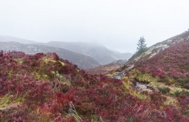 Heather scottish hills, in a foggy winter day.