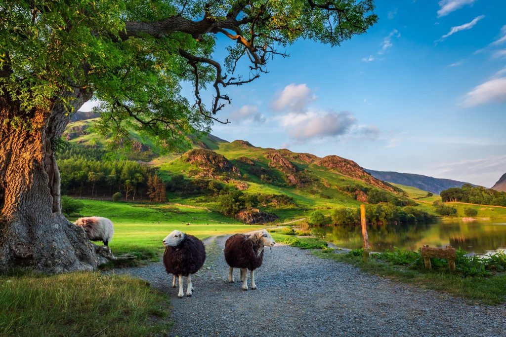 Photo of two sheep