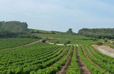 000d5e_france_provence_provence-vineyards-c06pl.jpg