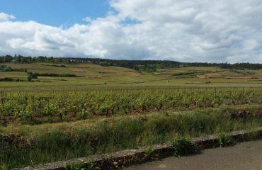 france_burgundy_rolling-hills-and-vi-.jpg