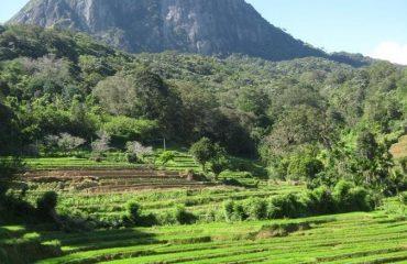srilanka/any/001a97/image-g.jpg