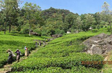srilanka/any/001b3b/image-g.jpg