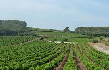 000d5e_france_provence_Provence-vineyards-g.jpg