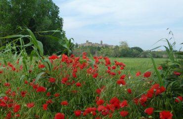 00010f_spain_catalunya_Countryside-views-fr-g.jpg