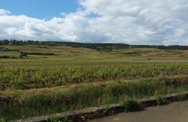 000874_france_burgundy_Rolling-hills-and-vi-g.jpg
