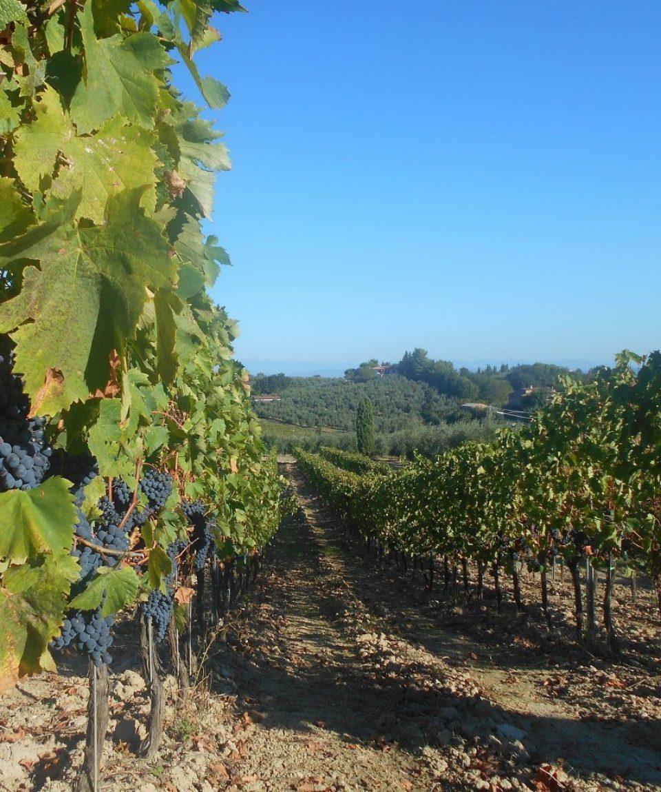 Cycling-through-vineyards-of-Barolo