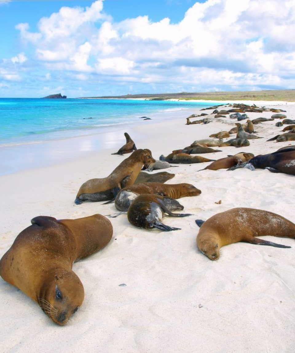 sea_lions_at_gardner_bay_-_6.jpg