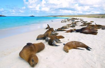 sea_lions_at_gardner_bay_-_6_0.jpg