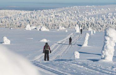 finland/finland-ski/001c20/Undulating-ski-trail-g.jpg