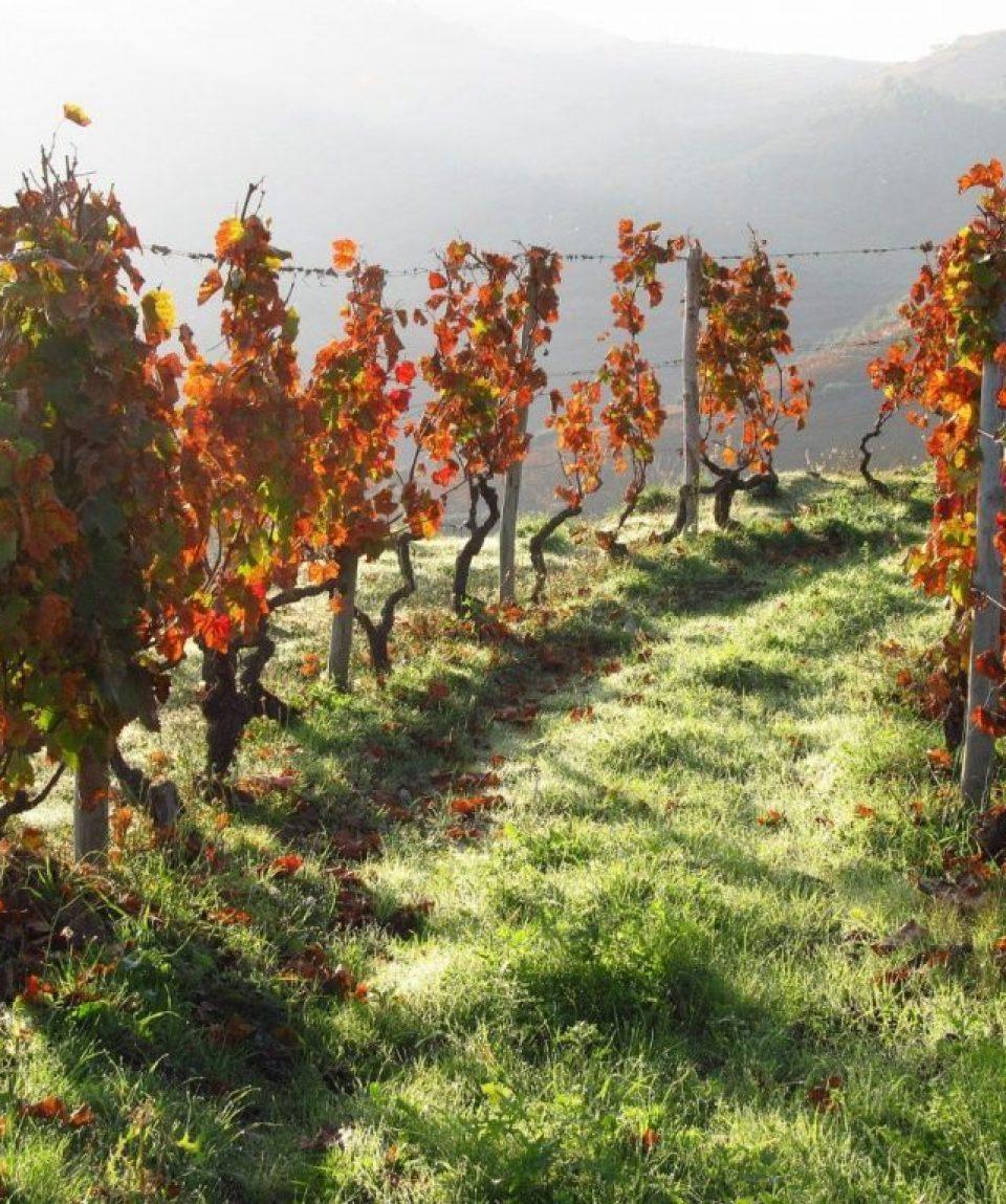 portugal/any/001c93/Vineyards-g.jpg