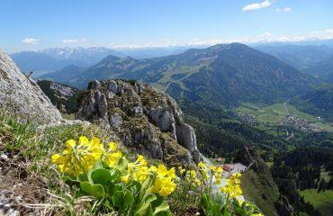 germany/any/001e26/Alpine-flowers-g.jpg