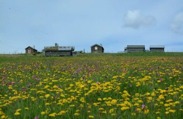 norway/any/001e67/Pasture-with-flowers-g.jpg