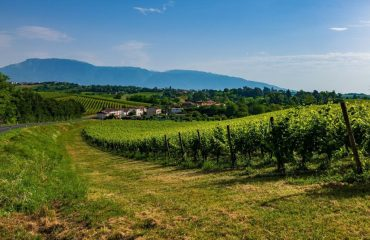italy/veneto/001cad/Vineyards-g.jpg