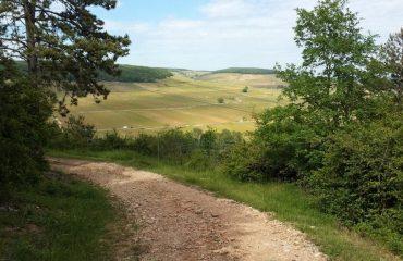 0008ea_france_burgundy_Hill-of-Corton-from--g.jpg