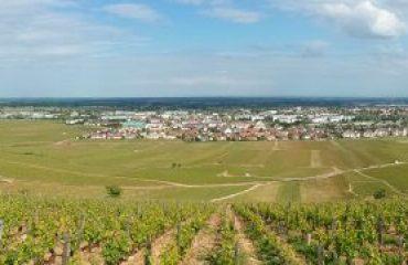 france_burgundy_vineyards-around-bea-.jpg