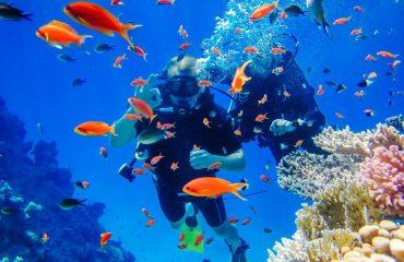 diving_at_the_coral_reefs_sharm_el_sheikh.jpg