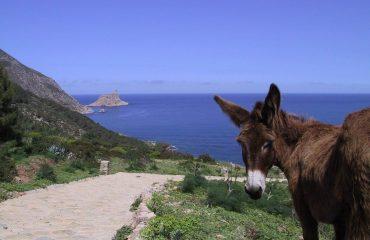 0005e5_italy_sicily_donkey-on-marettimo-g.jpg