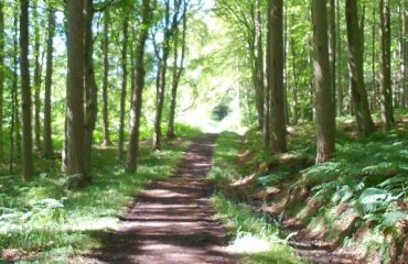 scw_-_through_the_woods_to_st_boswells.jpg